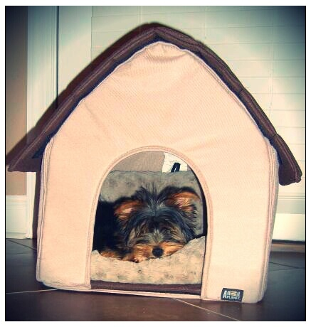 indoor dog house bed 1