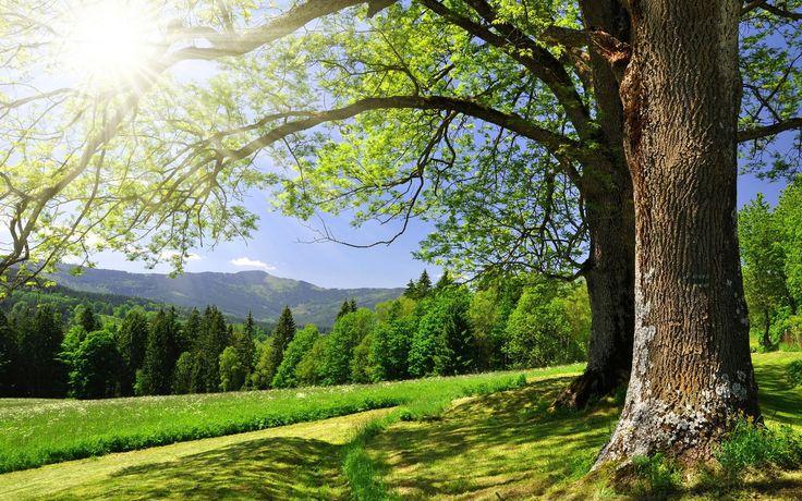 Обои summer, зелёный, sun, раздел Песочница - скачать бесплатно на рабочий стол