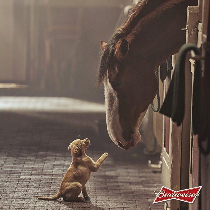 Budweiser  Super Bowl commercial...Best Buds