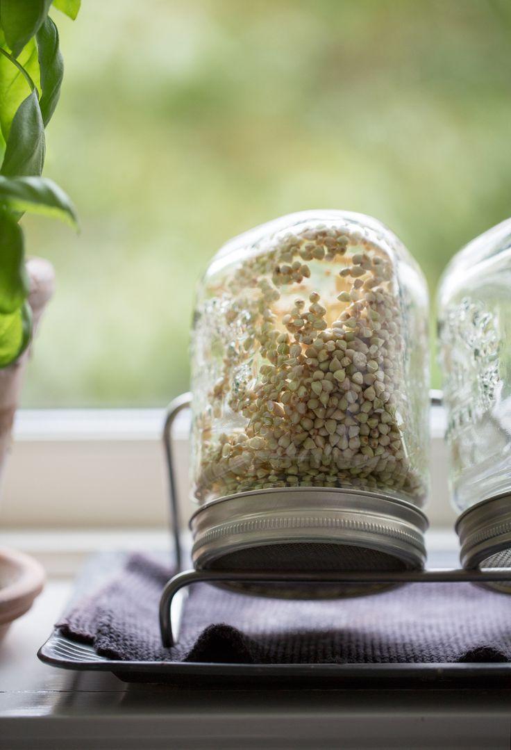Raw germogliato polenta di grano saraceno con fichi e pennini cacao :: Sonja Dahlgren / di Dagmar Kitchen