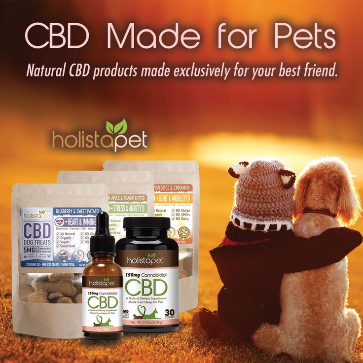 Tinctures, Capsules & Treats are some of the most common forms of Pet CBD. #PetCBD has the same effects on people as it does in our pets. This means that Dog's and Cat's can also enjoy the same health benefits of #CBDforpets. Read our full guide to Pet CBD here!. .  .  .  .  .  #cbdtincurefordogs #cbdcapsulesfordogs #cbddogtreats #holisticdogs  #holisticpets  #holistapet  #dogtreats  #doggytreats  #cannadog  #healthydogtreats  #organicdogtreats  #naturaldogtreats