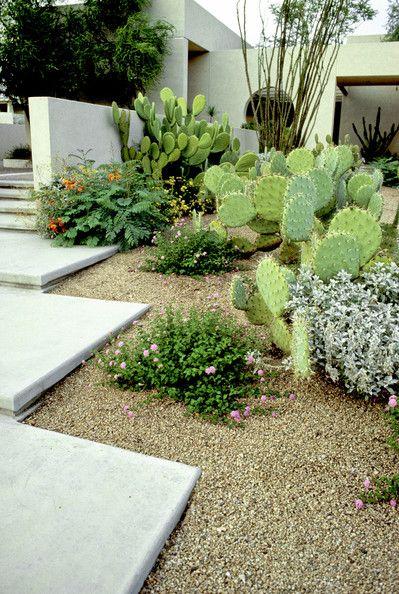 Southwestern Garden Photo