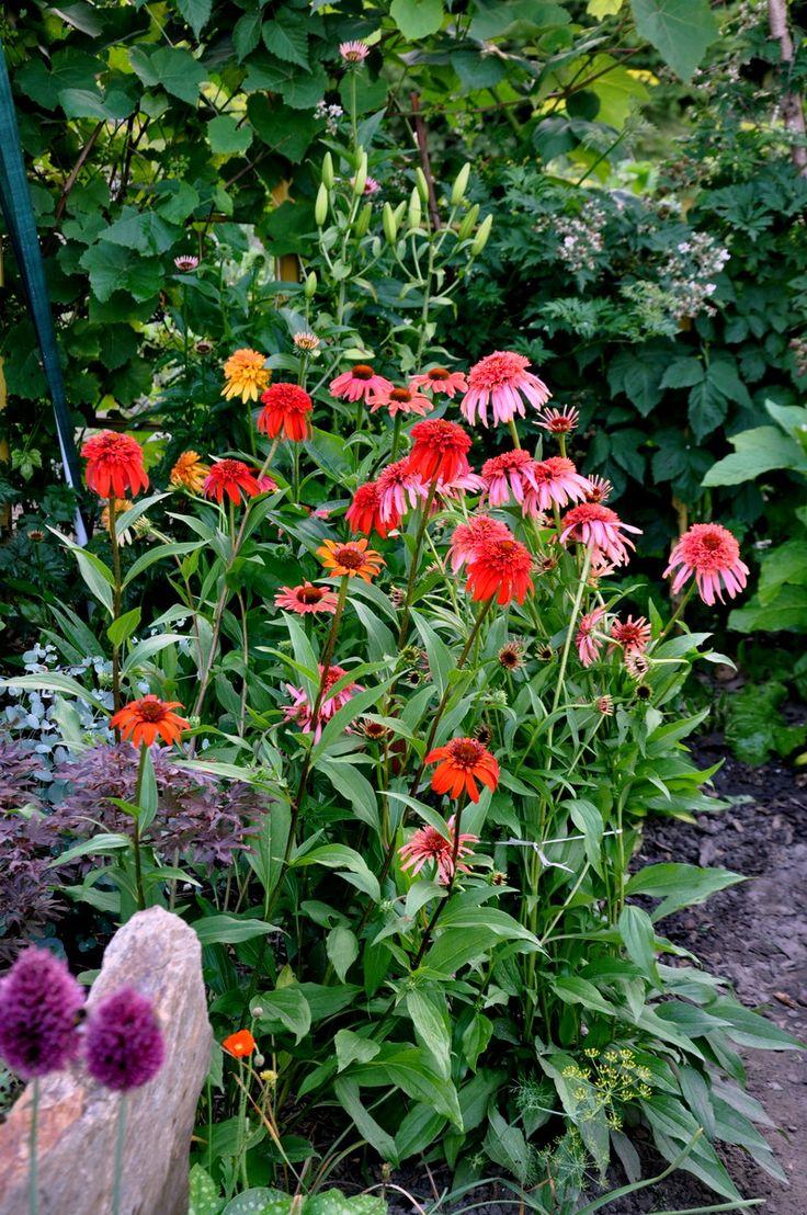 RS -Foto garden