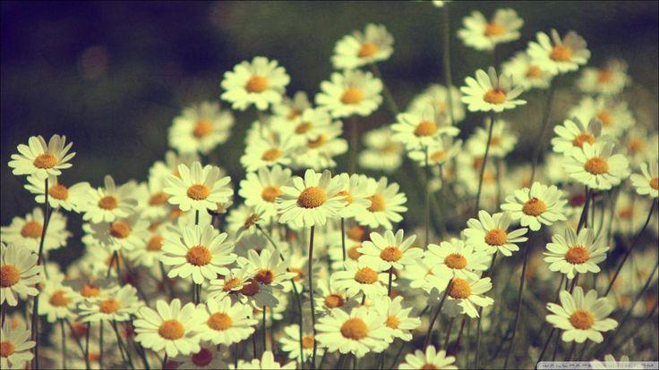 Flores-tumblr-vintage.jpg (Imagen JPEG, 1602 × 902 píxeles ...