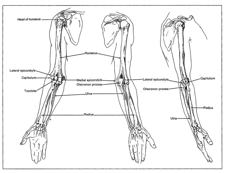 an introduction to the analysis of the human skeleton Download and read skeleton keys includes an introduction to human skeletal morphology development and analysis skeleton keys includes an introduction to human.