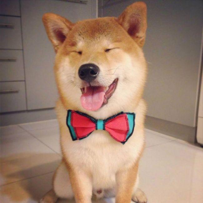 Gülen köpek ısırmaz: Gülümsemeleriyle kalbinizi ısıtacak köpeklerin sevgi dolu fotoğrafları ajanimo.com'da.. #ajanimo #ajanbrian #dog #köpek #animal #pet #animals #love #happy #funny #hayvan #pet #petmagazine #magazin #smile #photograpy #fotoğraf #cute #sevimli #pretty #prettyphotograpy #amazing
