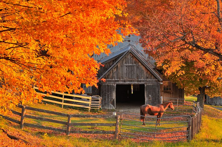 Fall Images of VermontAutumn Scene, Beautiful Autumn, Country Scene, Except, The Farms, Autumn Beautiful, Autumn Barns, Country Life, Fabulous Fall