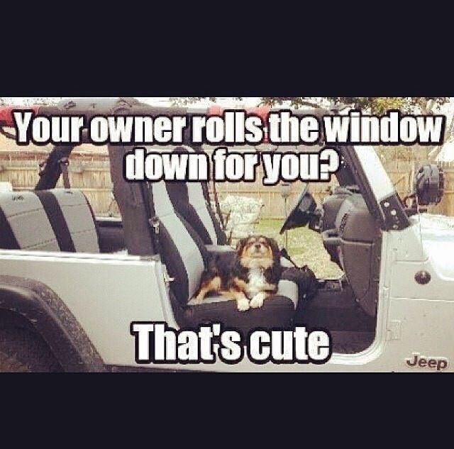 Jeep wrangler quotes / dogs | Vickie_Fontenot |