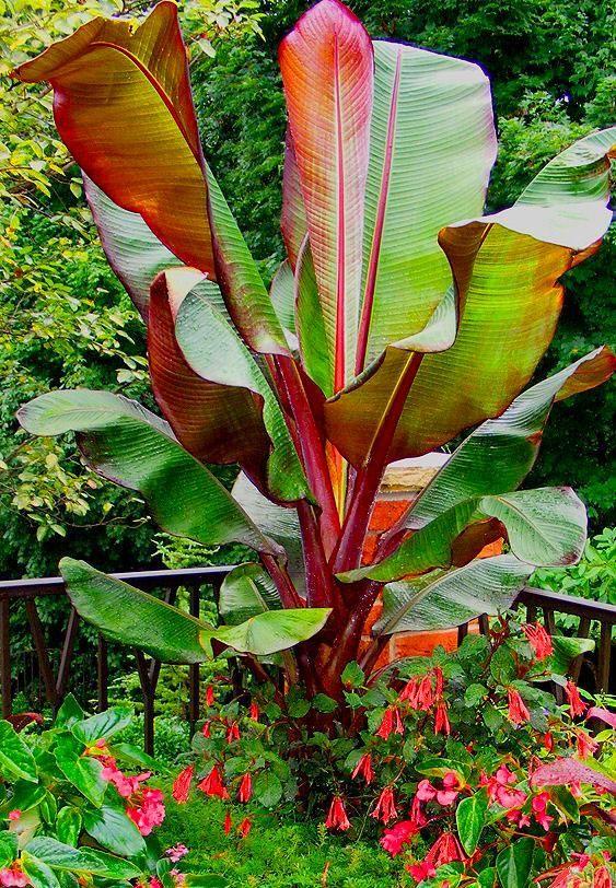42++ Banana tree landscaping ideas ideas in 2021