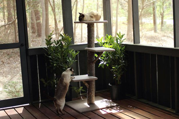 1000 ideas about cat castle on pinterest kitten toys for Do it yourself cat condo