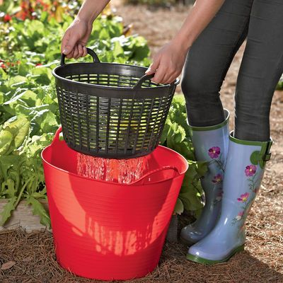 Rinse veggies right in the garden and then re-use the water on the plants. Plastic bucket and small laundry basket/colander from Dollar Tree would do nicely.