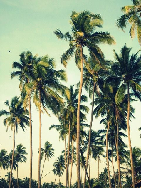 Endless palms
