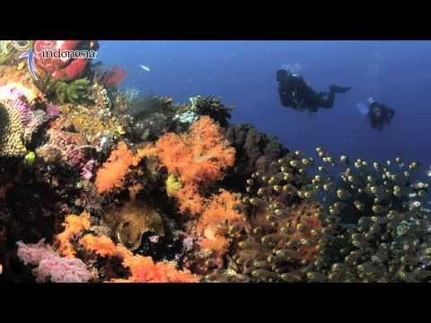 Diving Around Komodo Island.   #ConflictofPinterest