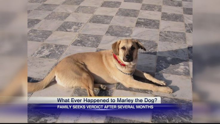 Good Morning Everyone! Hope everyone has been well. Here is our interview with the local Channel 7 News that came yesterday, today and tomorrow. Hopefully, this will spurn more local coverage from radio and other local news and Marley can come home SOON!!! Thank you ALL for your support, help and positive prayers to get him home! #FREEMARLEY  Please take a moment and send an email to Channel 7 to Thank Carly Hildyard for her coverage. http://www.wjhg.com/station/bios/news/276178181.html