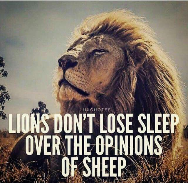 Lion Sheep Quote: 1954 Best Motivational Words Images On Pinterest