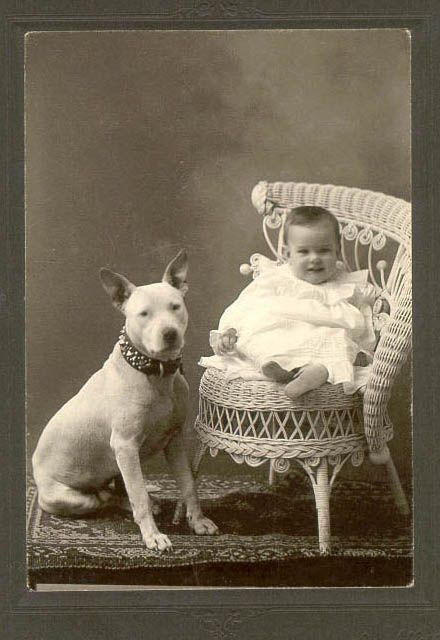 This early Bull Terrier and little friend were photographed in the late 1800s to early 1900s.
