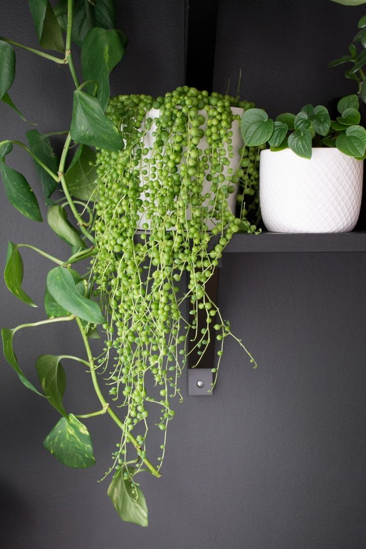 Pin On Indoor Gardening