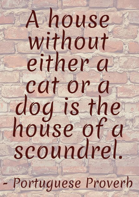A house without #cat or #dog... #quote #proverb   www.fordogtrainers.com