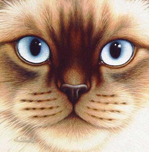 картинки мордашки кошечки идеально подходит для