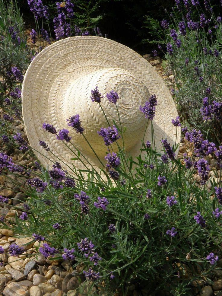 ** lavender.
