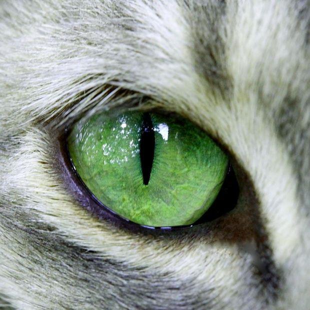 Photo prise par Claudine Ferrini Le champ de vision total d'un chat est supérieur à 200°, contre seulement 180° chez l'homme.Trouvez la meilleure assurance pour votre animal de compagnie grâce à ce comparateur en ligne Découvrez d'autres images de Claudine Ferrini