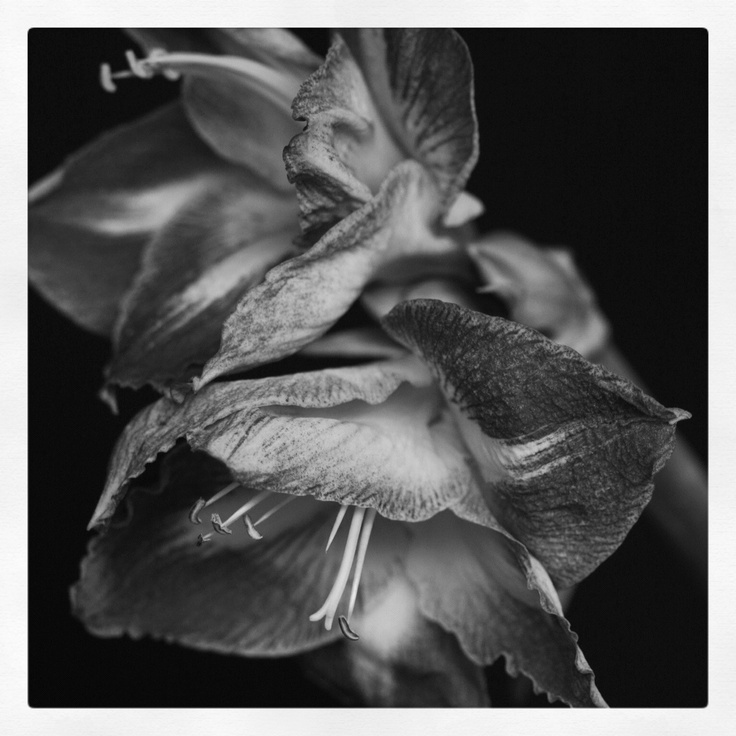 black and white flower: White Flowers