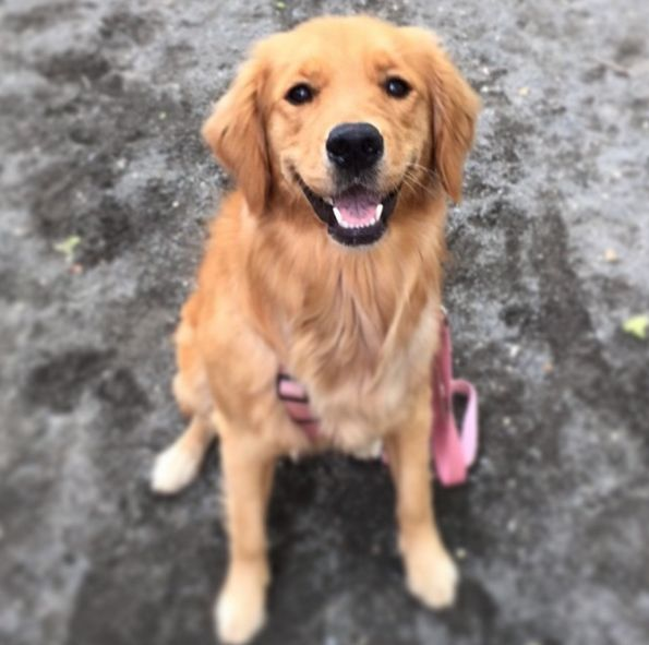 Mario Lanza Dog Park - Philadelphia, PA - Angus Off-Leash #dogs #puppies #cutedogs #dogparks #philadelphia #pennsylvania #angusoffleash