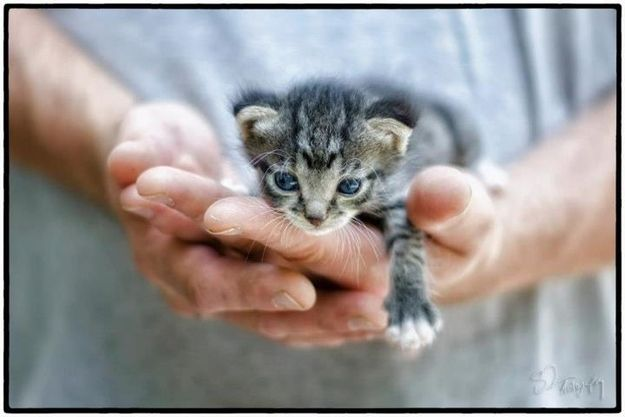 A tiny little kitten rescued from a junk pile ... aww