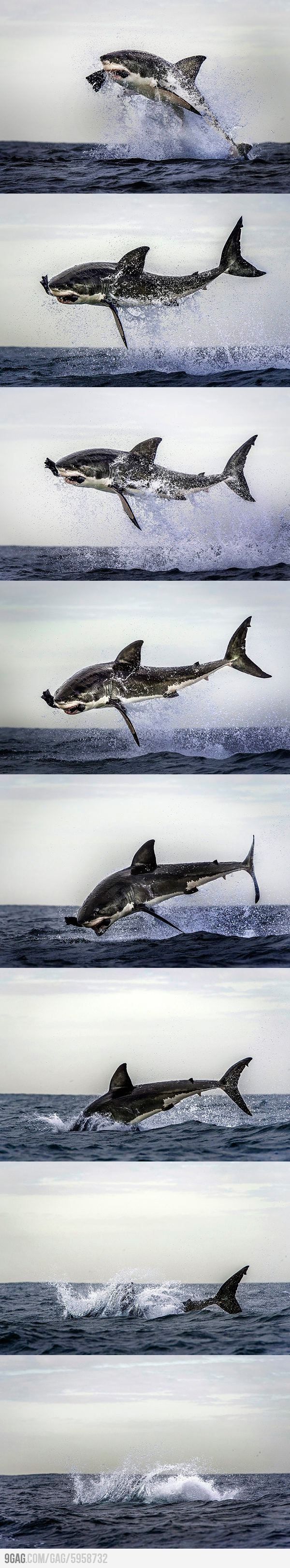 344 best Sharks images on Pinterest