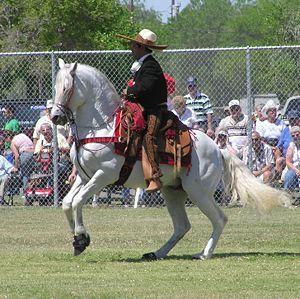 Caballo azteca ensillado y montado