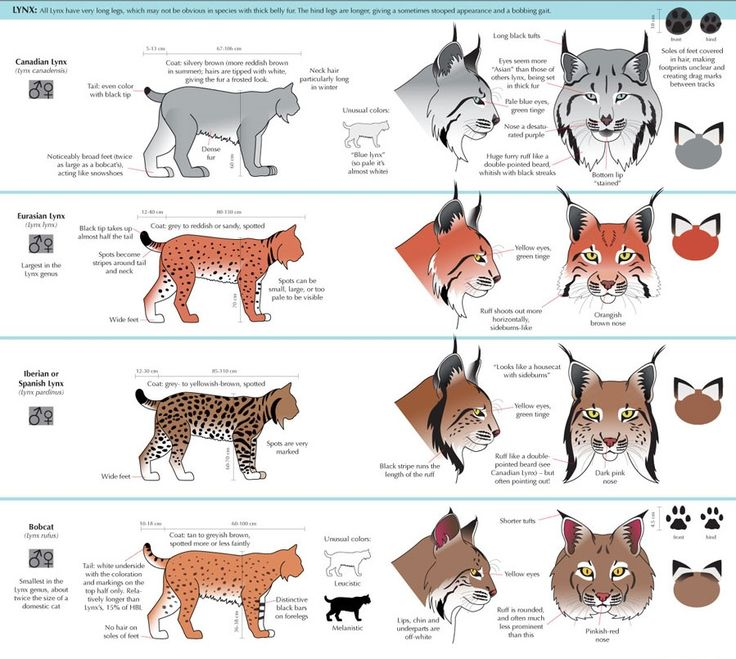 18 best CAT images on Pinterest | Anatomy reference, Drawing ...