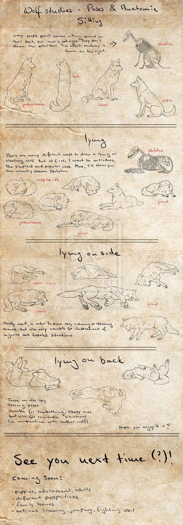 Canine Tut - Basic Poses P.1 by ProfelisAurata