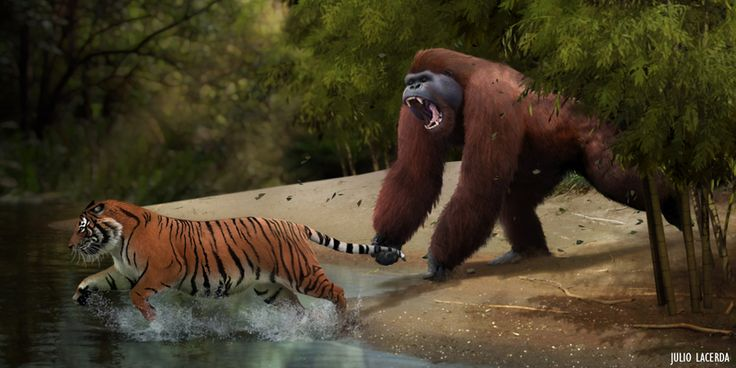 Gigantopithecus lived in Southeast Asia from 9 million to 100,000 years ago, making it a contemporary of several hominid species and primitive humans.  It was possibly hunted by Homo erectus,