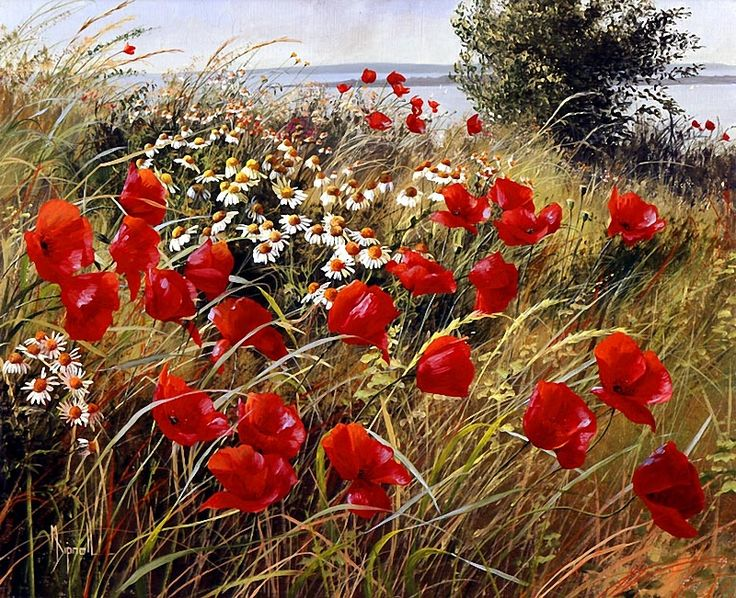 Wild corn poppies and ox-eye daisies growing here and there amidst the dune grass. Photo: Mary Dipnall
