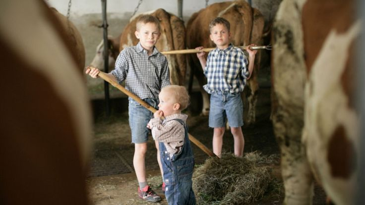 How cats and cows protect farm children from asthma - Immunologists from the University of Zurich have shown that a sialic acid found in farm animals is effective against inflammation of lung tissue. This study opens up a wide variety of perspectives for the prevention of allergies.
