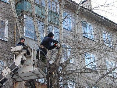 Кронирование, обрезка деревьев в Екатеринбурге