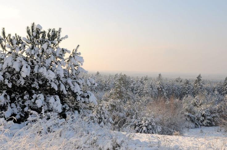 Zimowy pejzaż/Roztocze in winter time.