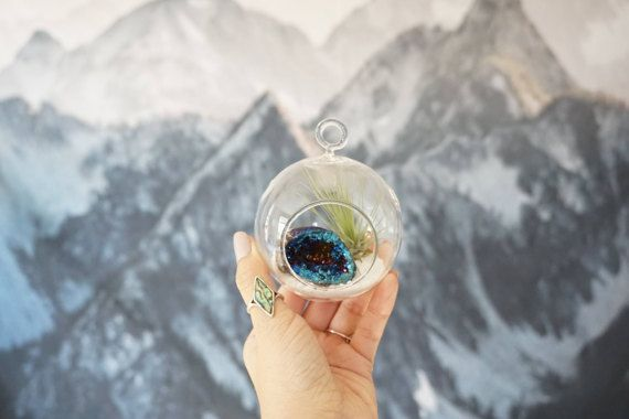 NEW Petite Air Plant Terrarium Kit  Crystal  Build your own