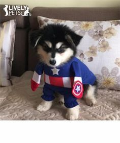 Captain America Halloween Costume for Dogs and Cats | FREE SHIPPING   From www.LivelyPetsOnline.com ! Check it out in the Halloween Superstore!