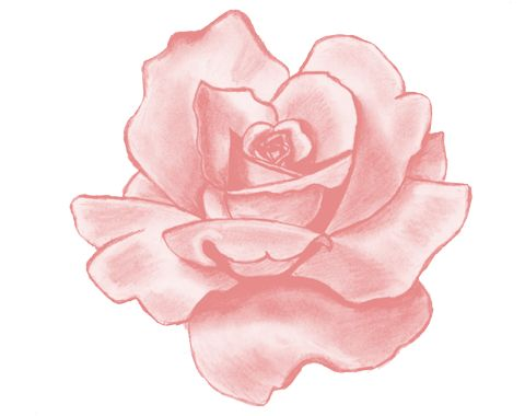 13 best Drawings FLOWERS images on Pinterest Drawings Rose