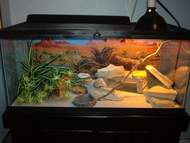 Reptile Tank Bearded Dragon awesome
