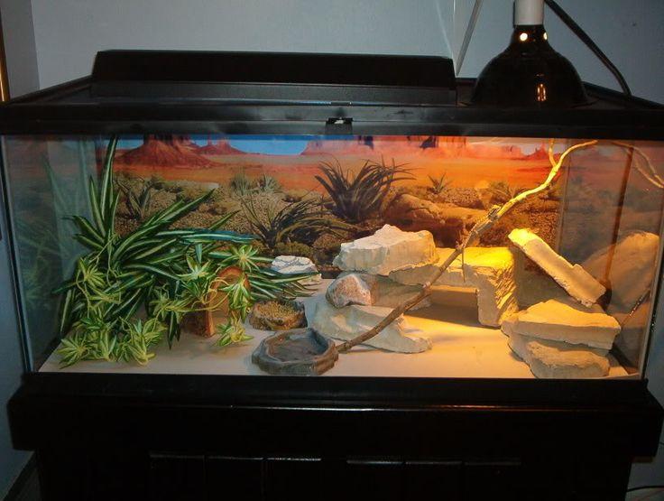 Reptile Tank Bearded Dragon awesome | reptiles | Pinterest - photo#10