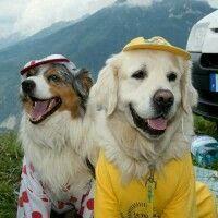 Camisa amarela e de bolinhas vermelhas Tour