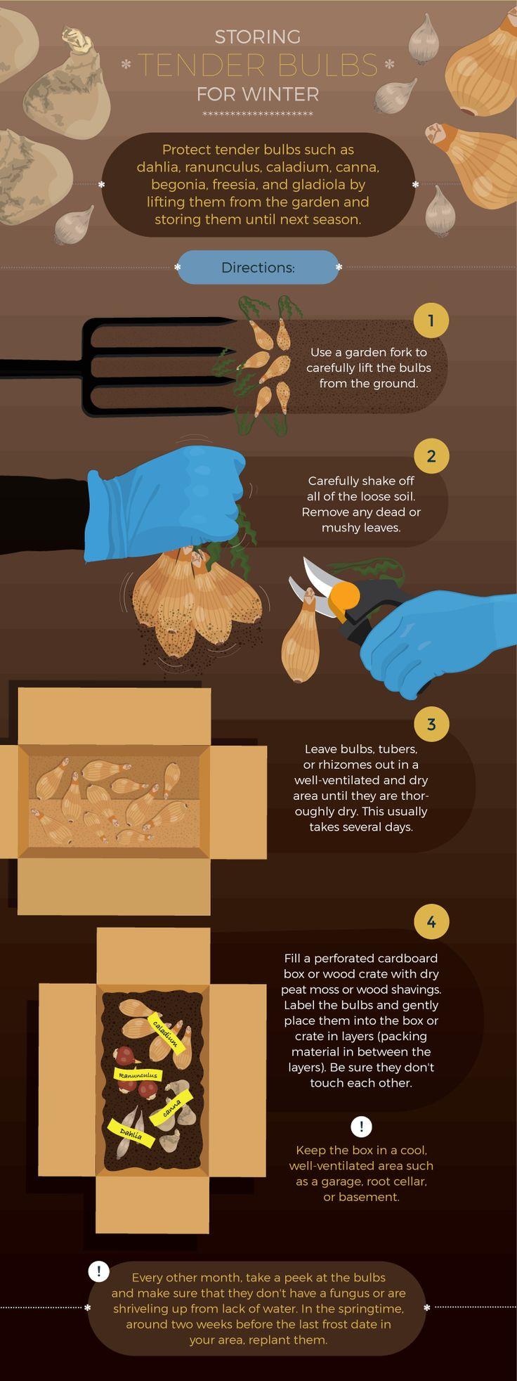 329 best gardening images on pinterest garden tips gardening
