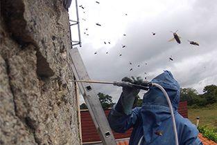 Destruction d'un nid de frelons. Morbihan http://www.abat-guepes.fr/
