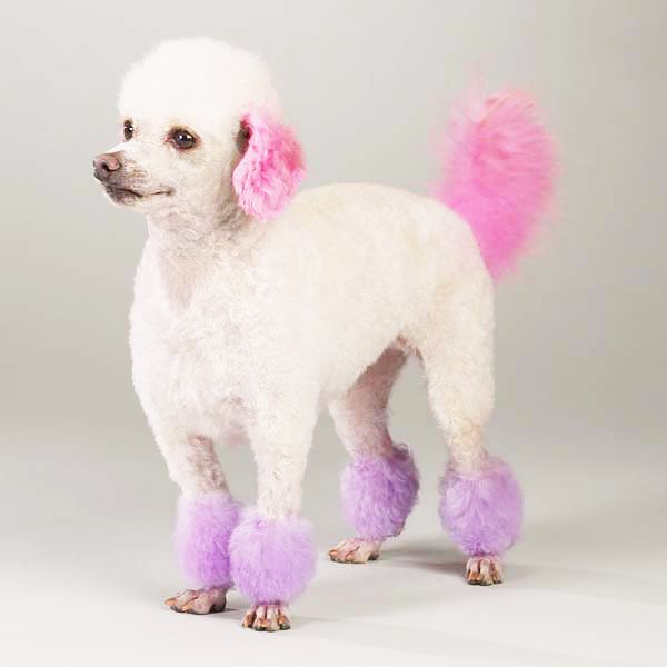Purple colored dog Fluffy  and Manish Arora have outraged the Animal Activists in India I Pet News