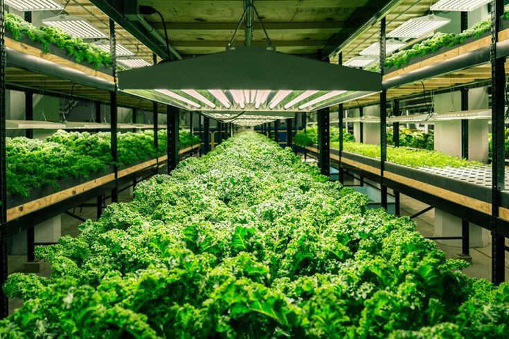 This Old Factory Now Full Of Fish And Kale Is Revitalizing A