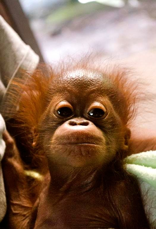 Yes, its me .. now go and find my Mum.. or kill the bastards that killed her....... oh yes and all the Palm Oil users too while you are about it.......
