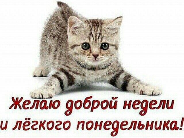 С понедельником! Прикольные картинки про понедельник, стихи позитивные,  смешные приколы про понедельник и р… в 2021 г   Доброе утро, Смешные  фотографии кошек, Смешные котята