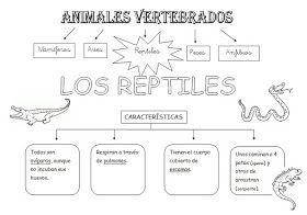 Cono. Reptiles